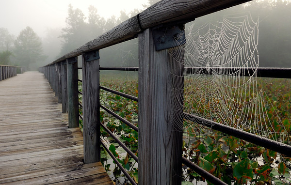 Spider Web - Beaver Marsh Boardwalk - Cuyahoga Valley National Park