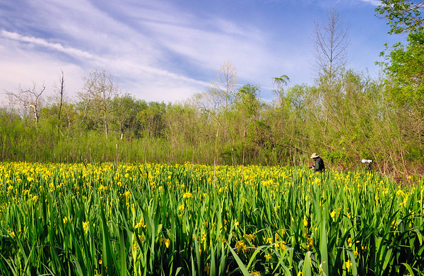 Photographer at the Wild Iris Field - Cuyahoga Valley National Park