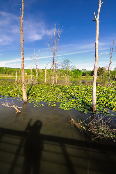 My Shadow at the Beaver Marsh - Cuyahoga Valley National Park