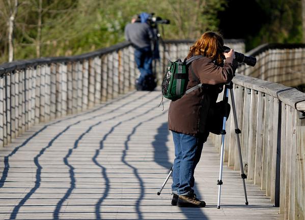 Beaver Marsh Boardwalk