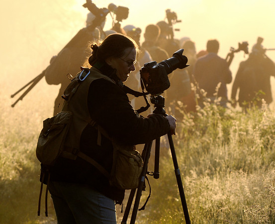 Photographers Head into Battle at the Beaver Marsh - Cuyahoga Valley National Park
