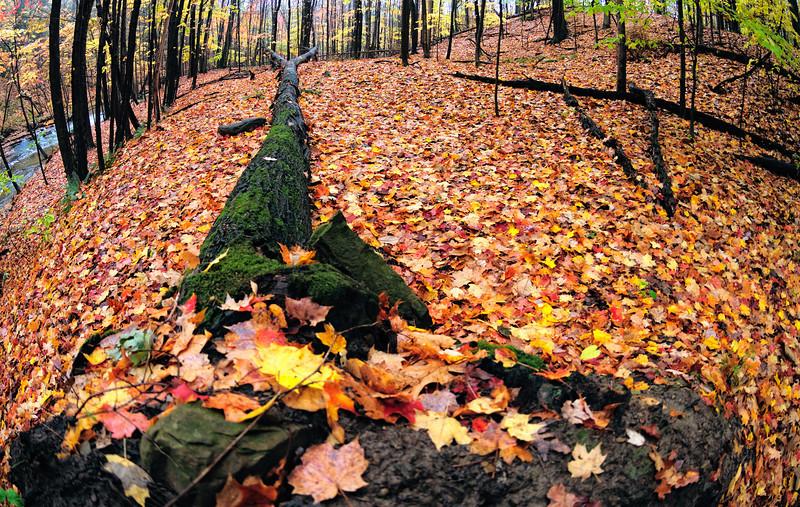 Cuyahoga Valley Photo Walk - Bridal Veil Fall - Tinker's Creek Overlook