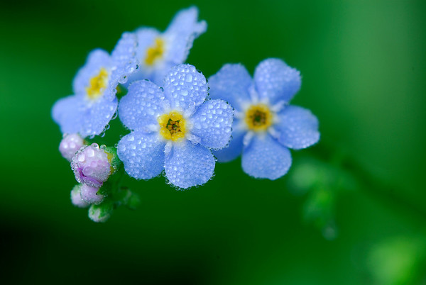 Wildflowers - Kendall Lake - Cuyahoga Valley National Park