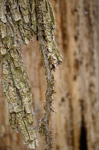 Weird Wood Shot - CVPS Photo Walk - Hemlock Trail