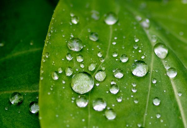 Water Drops - Hemlock Trail