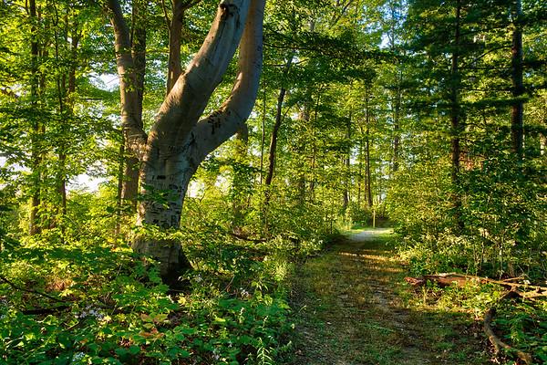 Seven Ponds Peninsula  Path