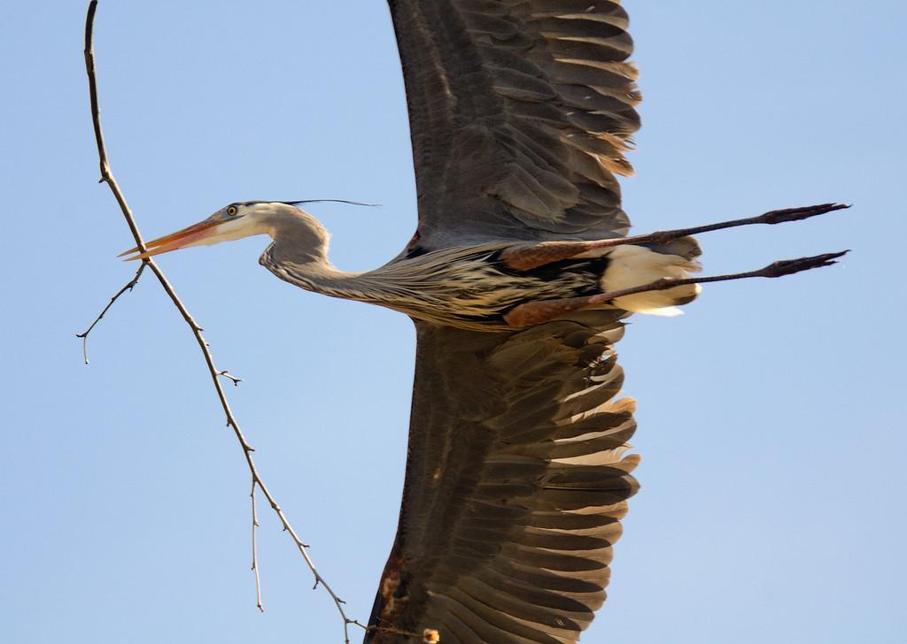 Heron Rookery - Cuyahoga Valley National Park
