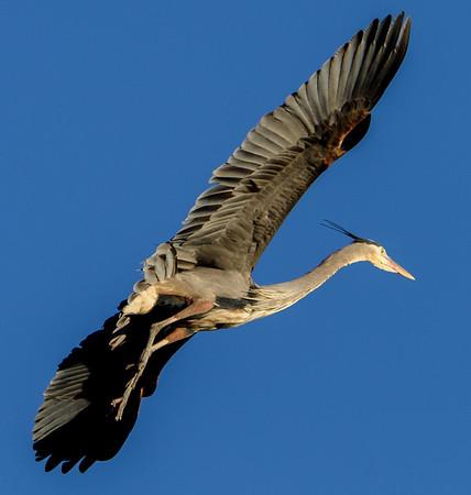 Heron Rookery
