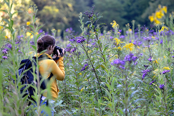 Photographer at the Ironweed Field