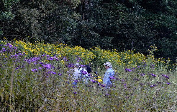 Photographers exploring the Ironweed Field