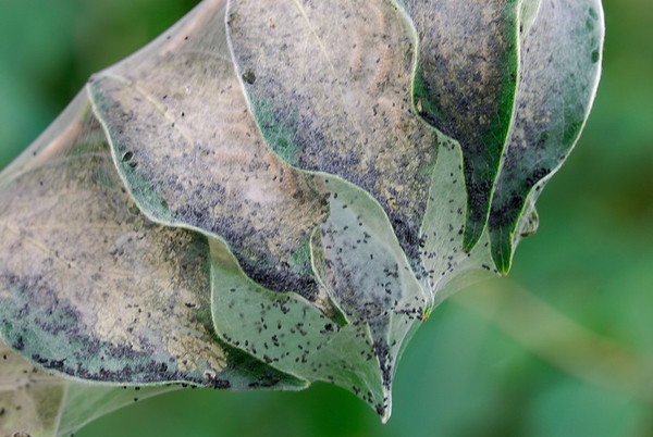 Web Covered Leaves - Terra Vista - Cuyahoga Valley National Park