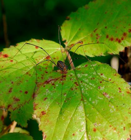 Spider - Terra Vista - Cuyahoga Valley National Park