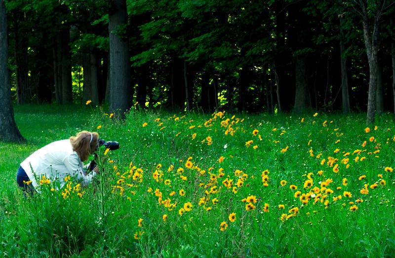 Wildflower Photographer