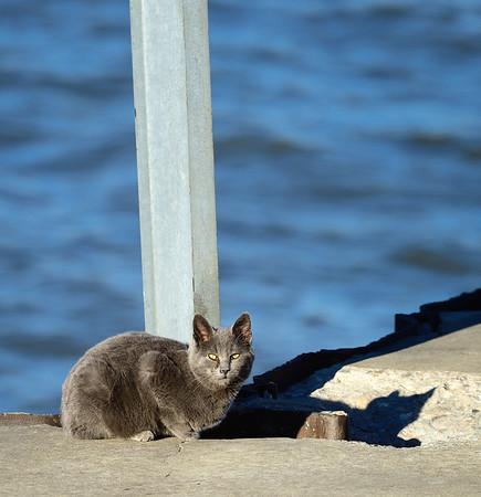 Cat at Gordon Park