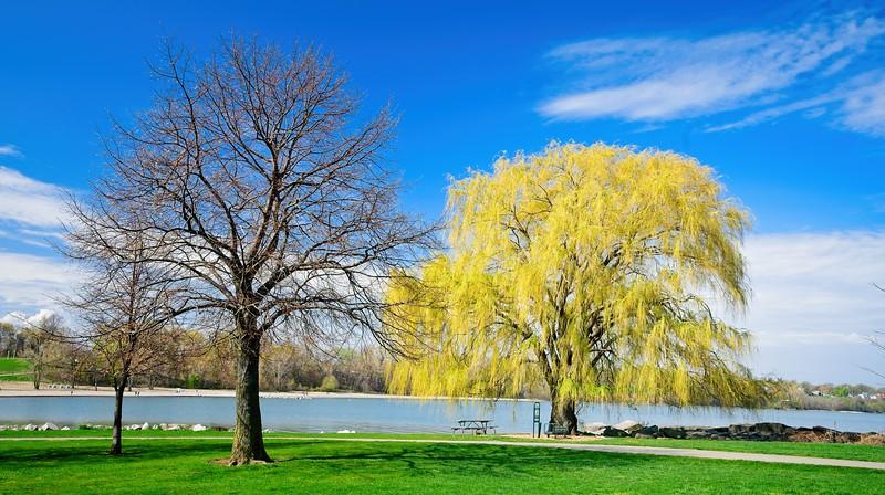 Edgewater Park 2021
