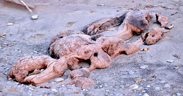 Driftwood - Looks like the Skeleton of a Prehistoric Animal - Lake Metroparks