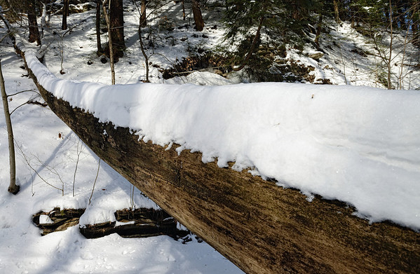 A Winter Hike through the Penitentiary Glen Gorge - Fallen Tree