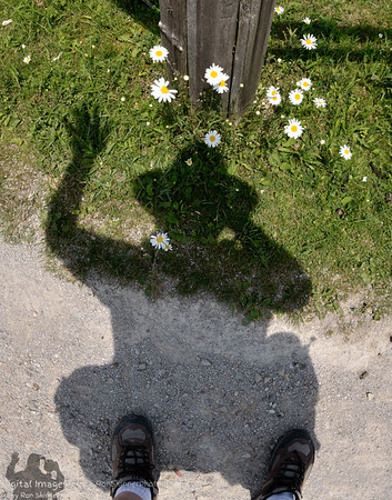 My Shadow is ready for Spring with a flower in his hat and lapel!!!  - Sandy Ridge Reservation