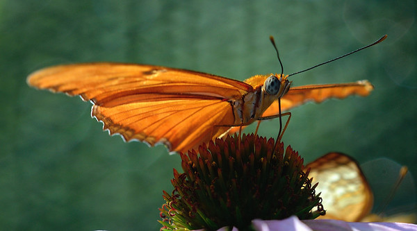 Butterfly at Miller Nature Preserve