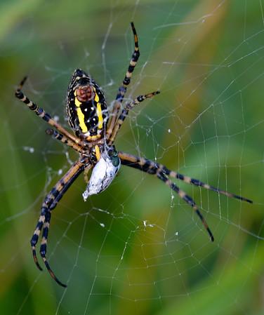 Spider at Sandy Ridge