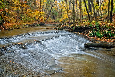 Fall Colors in the Tinker's Creek Reservation