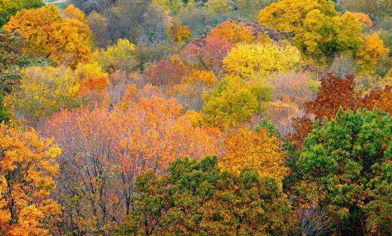 Fall Colors - Mt Jeez