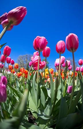 Spring at the Botanical Gardens