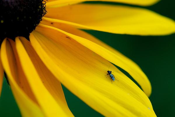 Bug on a Flower