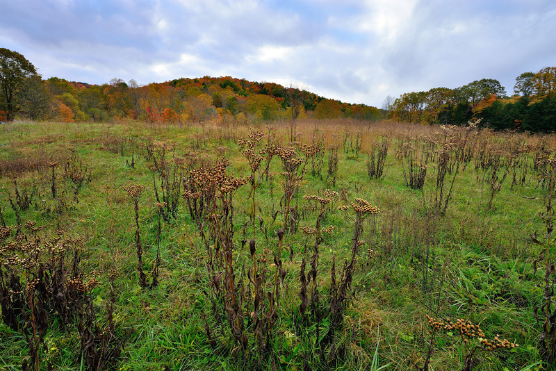 Field near Conkles Hollow - Hocking Hills