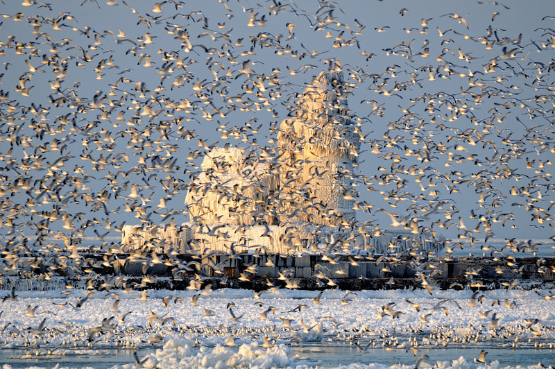 Gulls at Cleveland's Frozen Lighthouse