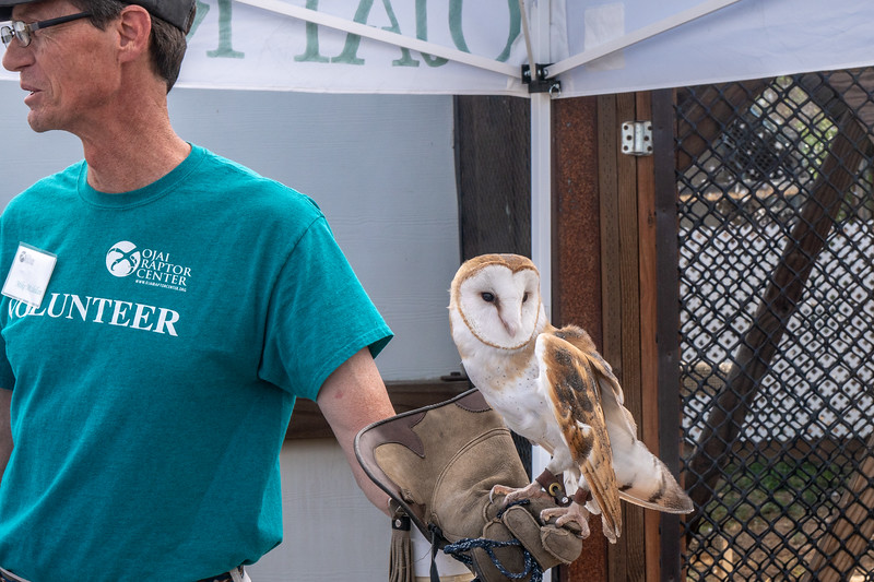 Tito, the barn owl