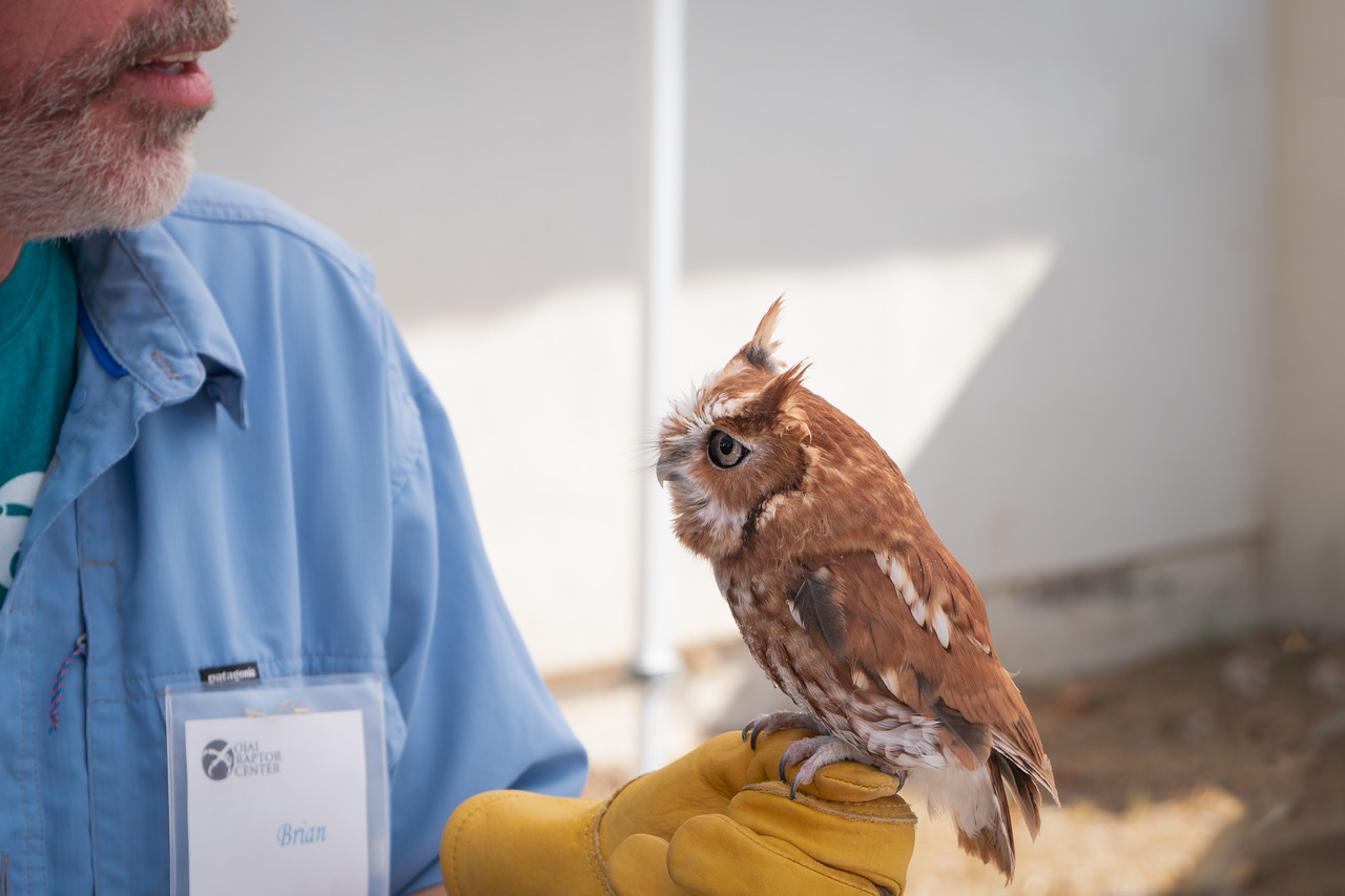 Riley and his volunteer at the Ojai Raptor Center