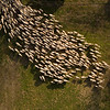 """""""Sheep In The Field"""""""