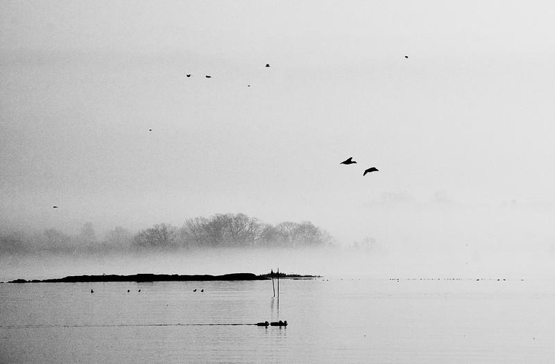 Shippan Morning Fog
