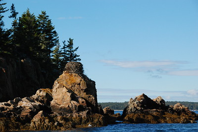 Tern's nest off the coast of Maine, October 2016.