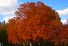 Minnesota Landscape Arboretum 10/16/15.