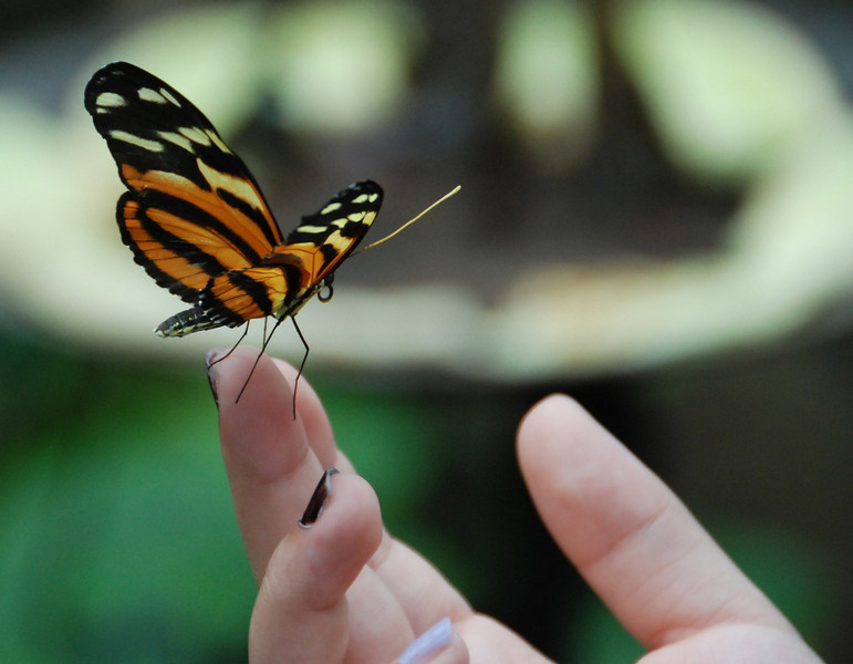 Butterfly on hand, Henry Doorly Zoo, August 2013.