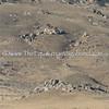 Cattle Drive II DH-5111E