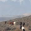 Herd Trek V DH-5197L