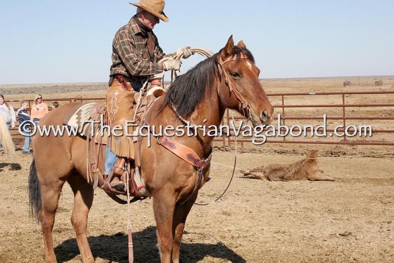 DH-5101D Cowboy