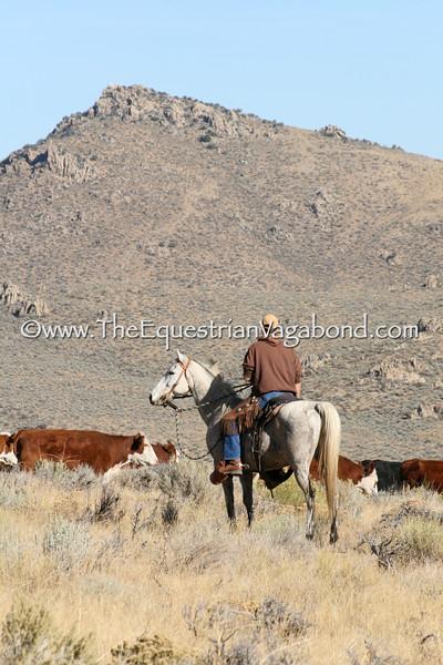 Riding Herd I DH-5113E