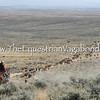 Cattle Drive III