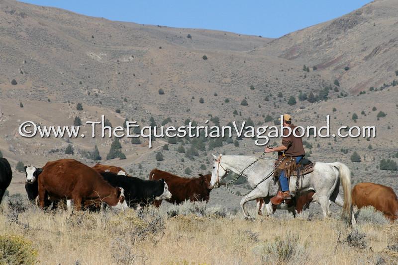 DH-5099E Herding Cattle