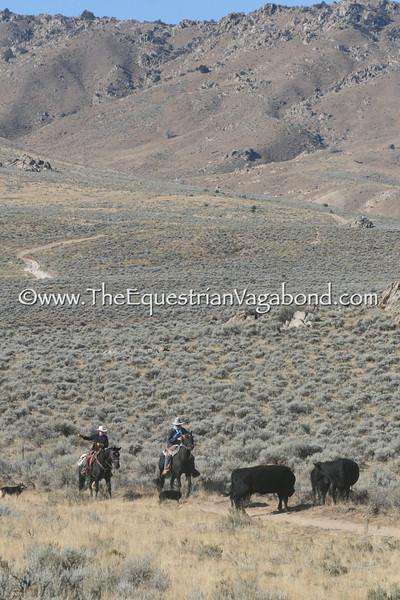 DH-5102E Herding Cattle