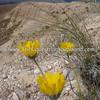 Owyhee Spring I DL-3058