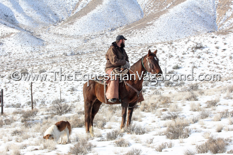 DHP-6014A Cowboy