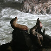 Sea lion caves, OR