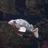 Oregon coast aquarium, Newport Oregon