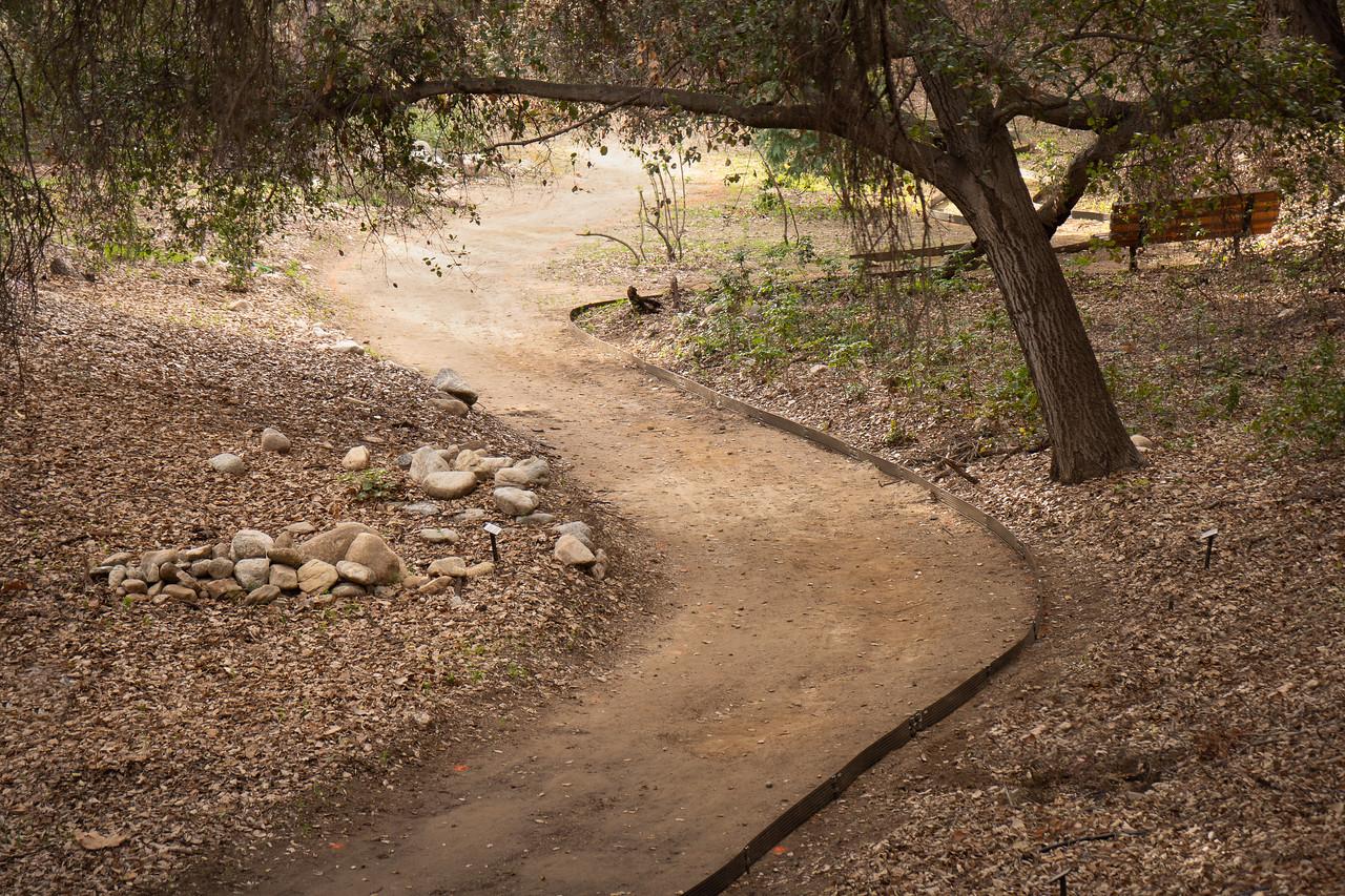 Path wandering through Rancho Santa Ana Botanic Garden