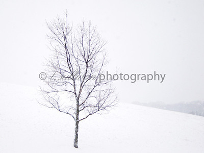 Lone tree in a snow storm